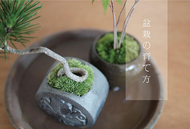 盆栽の育て方