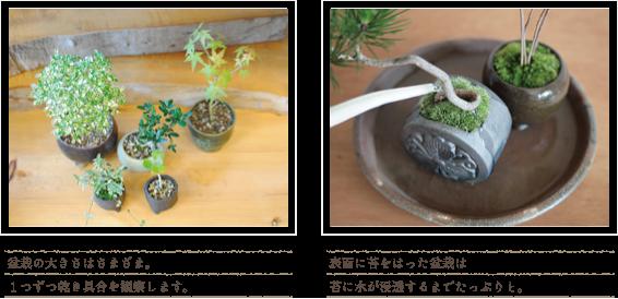 盆栽の育て方〜水やりは観察するところから